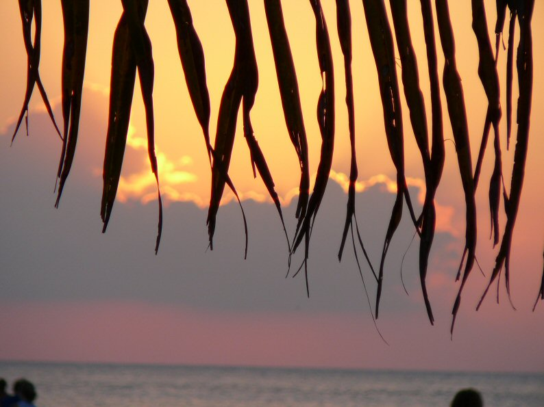 Cozumel sunset palm leaf